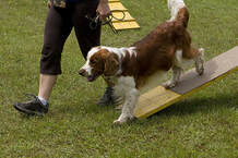 Dog Training Sarasota FL
