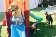 Dog World Sarasota | Doggy Day Care